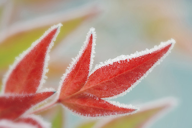 Close-up of leaves covered with frost